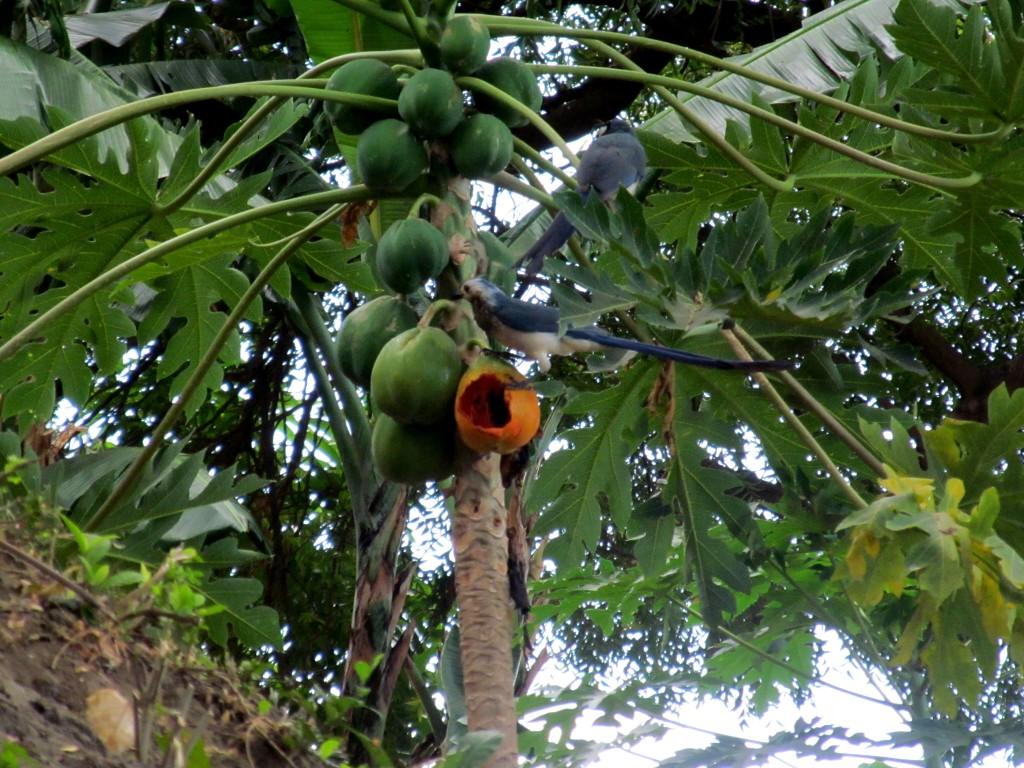 Nicaragua, Isla de Ometepe